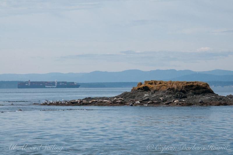 Harbor seals on Sentinel Rock