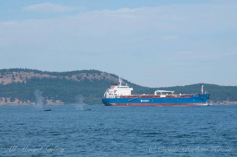 Pair of humpbacks swimming up Haro Strait