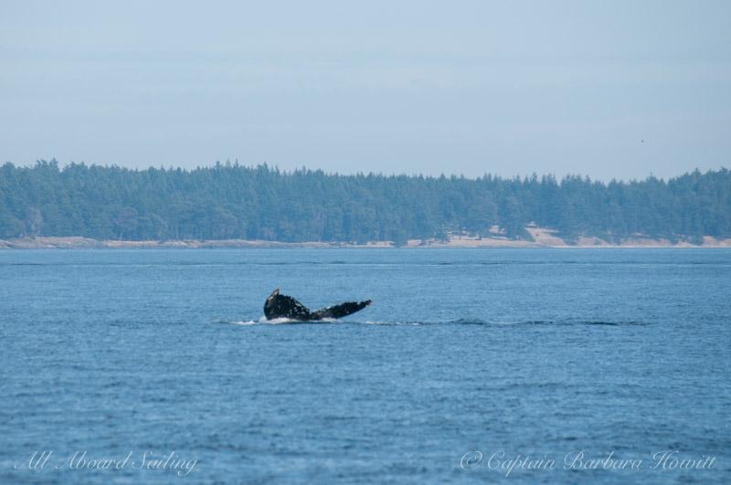 Humpback whale BCX0158 'Kappa'
