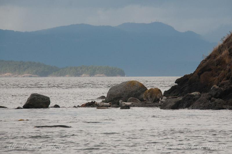 Harbor seals on Battleship Island