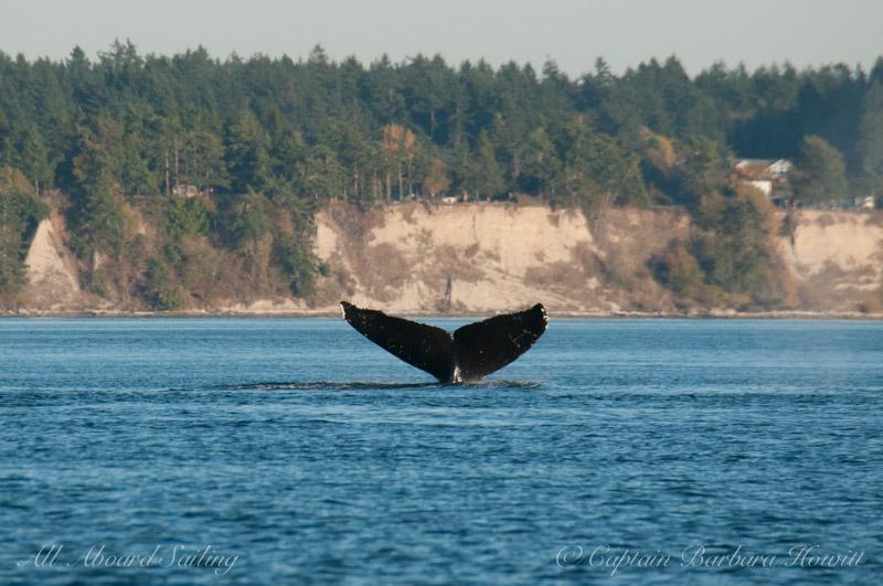 Humpback whale MMX0006