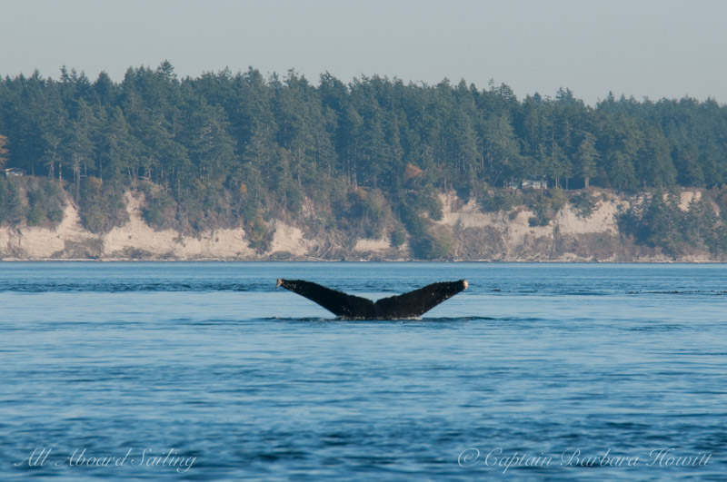 Humpback whale BCXukKeta2014#1 'Crater'