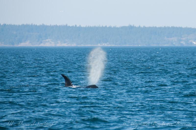 Transient orca T2C2